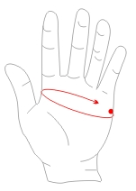 Measure the circumference of your palm just below your biggest knuckles. Do not include your thumb.